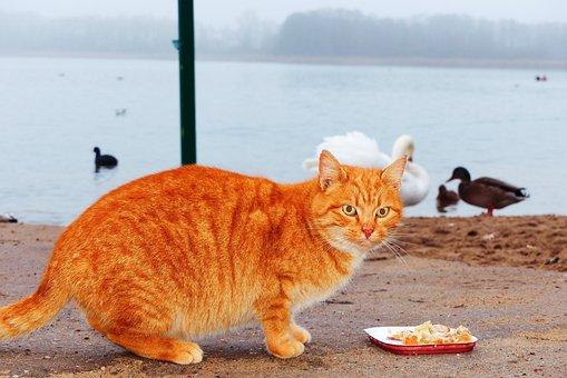 Cat, Tom, Pet, Rudy, Lake, Beach, Birds