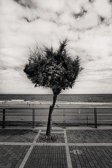 Tree, Wind, Walk, Landscape, The Quarries
