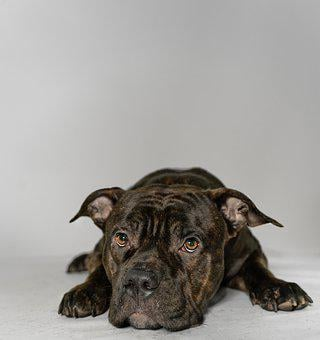 Dog, Pet, Animal, Cute, Race, Happy, Animal Welfare