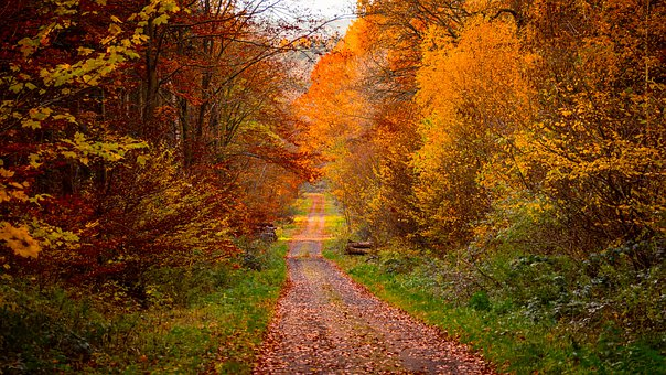 Forest, Autumn, Mood, Season, Colorful, October, Trees