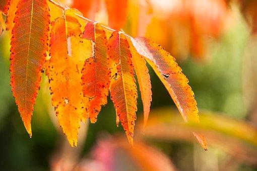 Autumn, Fall Foliage, Leaves, Tree