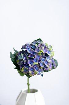 Hydrangea, Violet, Blossom, Bloom