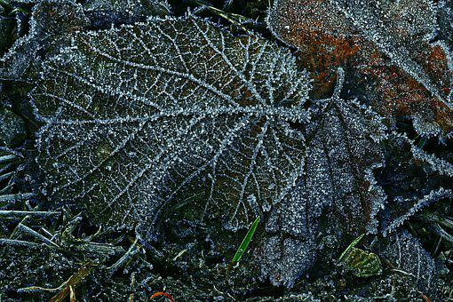 Leaf, Hoarfrost, Ripe, Morning, Cold, Frozen