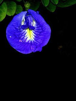 Famous, Great, Cool, Flower, Leaf, Day, Cuttack, Odisha
