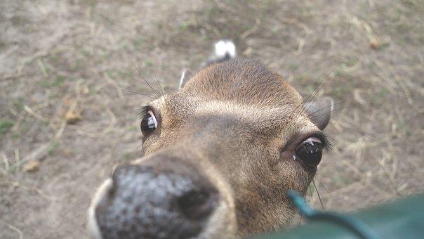 Animals, Animal, Deer, Petting, Autumn