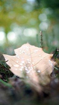 Nature, Sheet, Leaf, Moist, Drops, Rain, Raindrops