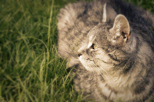Cat, Enjoy The Sun, Domestic Cat, Animal