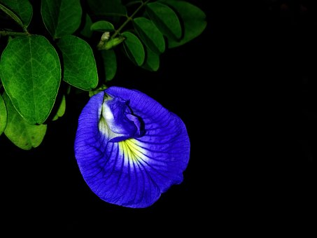 Famous, Great, Flash Light, Flower, Leaf, Day, Cuttack