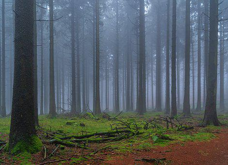 Forest, Fog, Nature, Trees, Fairy Tales