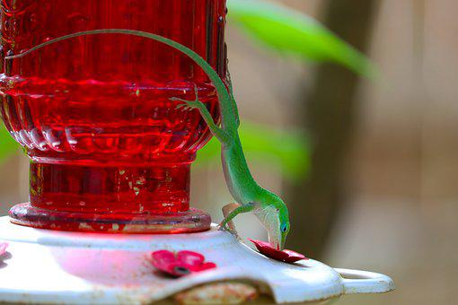 Reptile, Lizard, Bird Feeder, Animal, Red, Green, Funny
