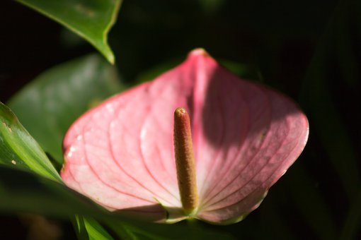 Flower, Cartridge, Garden, Nature