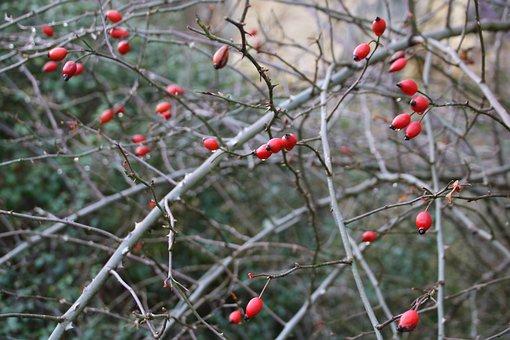Red Bay, Hawthorn, Winter, Nature, Landscape