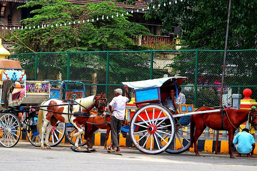 India, Coach, Horses, Taxi, Tour