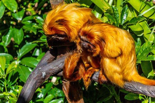 Monkey, Tree, Jungle, Animal, Nature