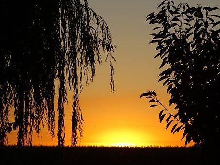 Nature, Sunset, Trees, Sun, Landscape, Forest, Tree