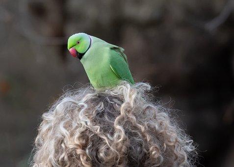 Parakeet On Woman'S Head