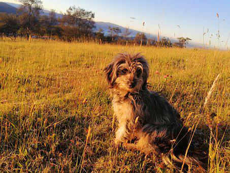 Animal, Dog, Puppy, Pet, Cute, Farm