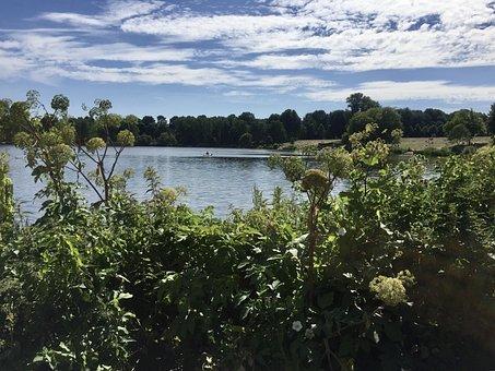 Lake, Stadtparksee, Summer, Swim, Blue