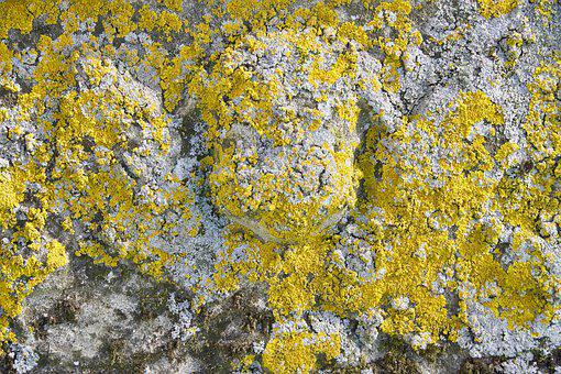 Moss, Nature, Crust, Texture, Stone