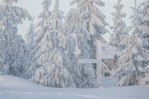 Snow, Trees, Street Sign, Snowfall, Snowing, Hoarfrost