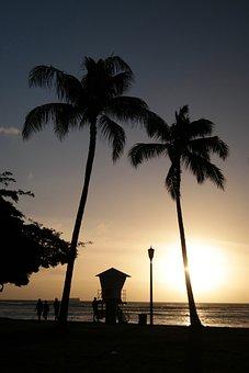 Beach, Palm, Silhouette, Yellow, Sunset