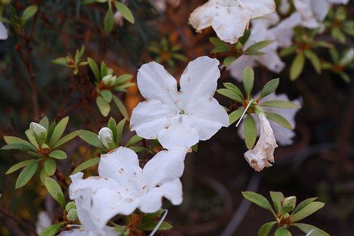 Flowers, White, Flower, Bloom, Beauty