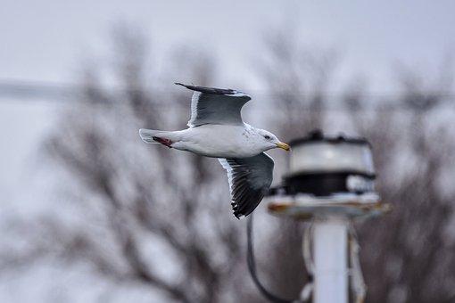 Animal, Sky, Wood, Street Lights, Bird