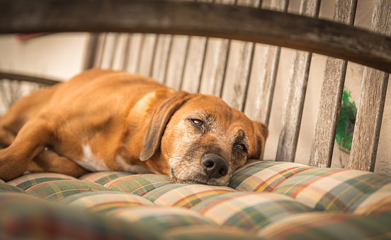 Dog, Concerns, Rest, Chill Out, Garden Bench, Pet