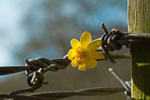 Differences, Contrast, Different, Wire, Flower, Yellow
