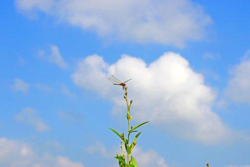 Dragonfly, Nature, Wallpaper, Thuneega, Sky