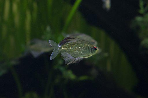 Pez, Fish, Agua, Verde, Acuario, Colombia, Zoo
