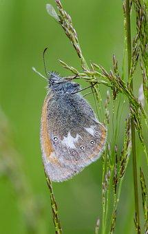 Butterfly, Grass, Spring, Beetle, Branch, Bough, Stick