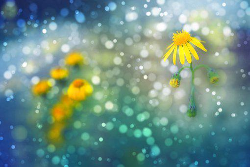 Flowers, Bokeh, Daisies, Light, Yellow, Blue, Green