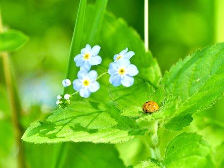 Macro, Ladybug, Green, Beetle, Nature, Luck, Insect