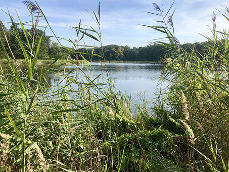 Lake, Badesee, Bredenbeker Pond