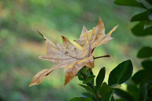 Autumn, Fall, Light, Leaves, Nature