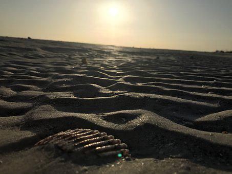 Shell, Florida, Vacations, Water, Sand, Mussels, Travel