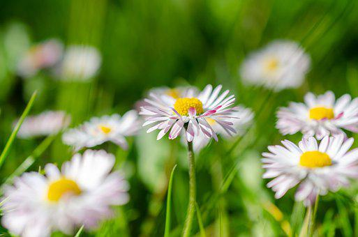Spring, Flower, Garden, Blossom, Bloom, Plant, Nature
