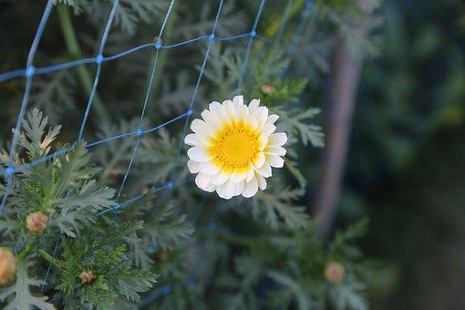 Flower, Garden, Nature, Plant, Bloom, Spring, Blossom