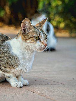 Cat, Loving, Pet, Animal, Bangladesh
