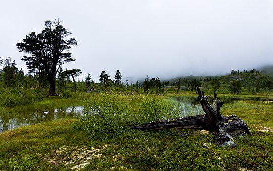 Landscape, Fog, Piece Of Wood, Water, Marsh, Trees