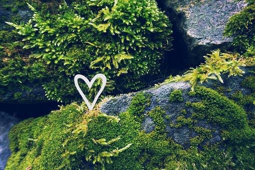 Heart, Nature, Moss, Stones, Love, Romantic, Romance