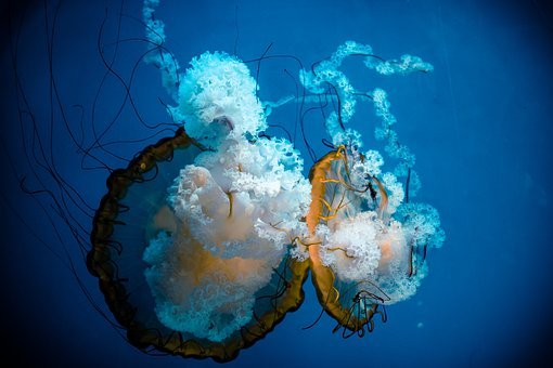 Water, Underwater, Diving, Sea, Ocean, Jellyfish