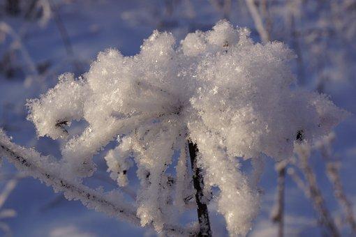 Nature, Winter, Calm, Snow, Cold, Grass, Spruce