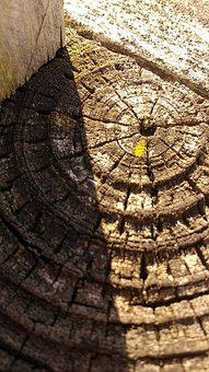 Tree Rings, Moss, Wood, Nature, Light