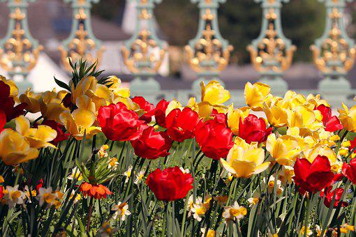 Tulips, Orange, Yellow, Red, Schlossgarten, Garden