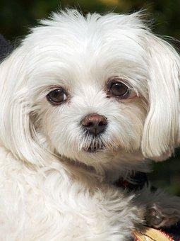 Dog, Portrait, White, Loyalty, Meekness, Dear