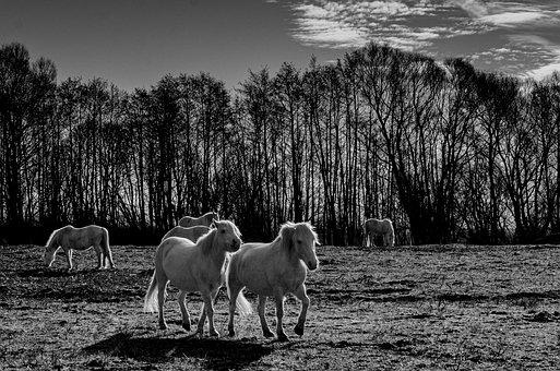 Horse, Horses, Camargue, Nature, Animals, Winter