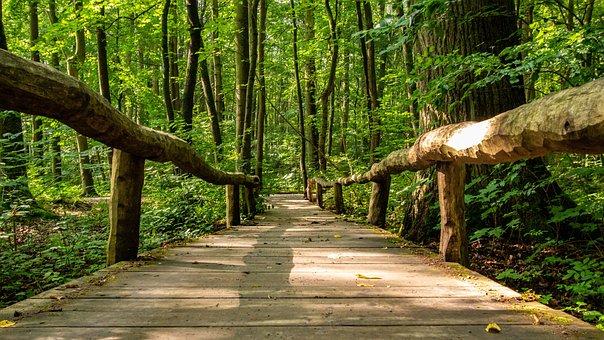 Path, Bridge, Away, Nature, Forest, Landscape, Wood