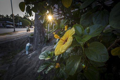 Yellow, Flower, Street, Thailand, Sunlight, Water